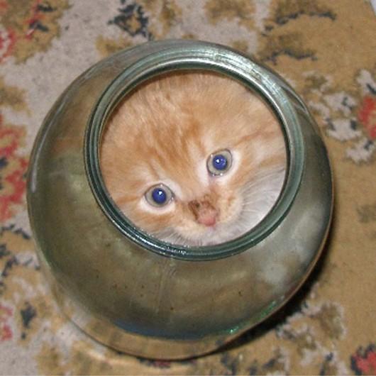 funny-liquid-cats-11-530x530