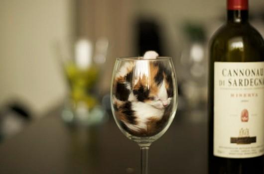 funny-liquid-cats-3-530x350