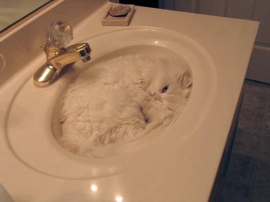 funny-liquid-cats-4-530x397
