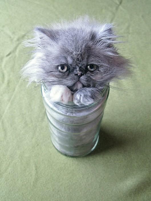 funny-liquid-cats-6-530x706