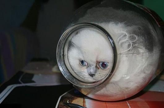 funny-liquid-cats-8-530x350