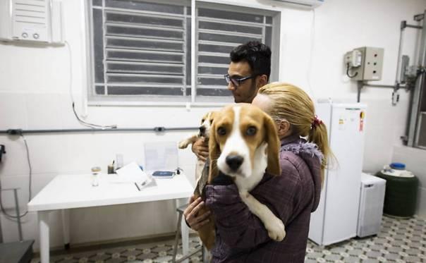 Ativistas invadem e resgatam cães da raça beagle do Instituto Royal, em São Roque (SP) 3