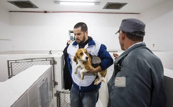 Ativistas invadem e resgatam cães da raça beagle do Instituto Royal, em São Roque (SP)