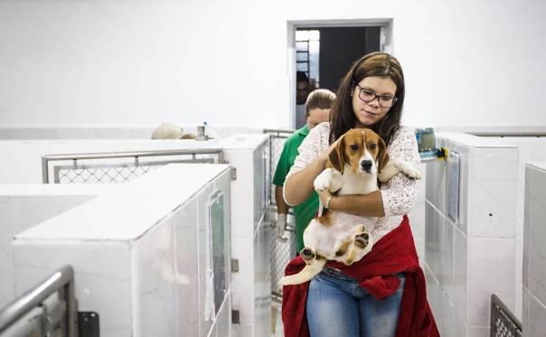 Ativistas invadem e resgatam cães da raça beagle do Instituto Royal, em São Roque (SP)5