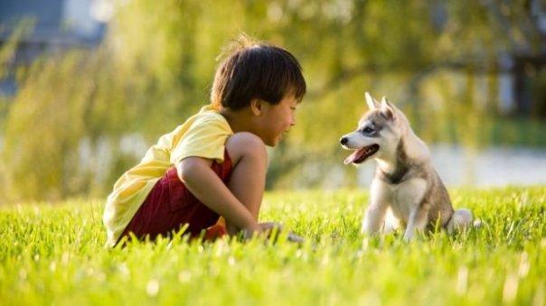 cachorro-crianca-20133108-size-620