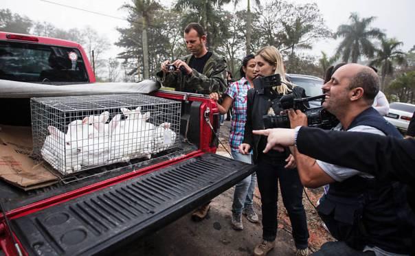 Coelhos também foram retirados do local pelos ativistas