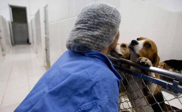Funcionária brinca com cães mantidos no laboratório, que fica em São Roque (SP)