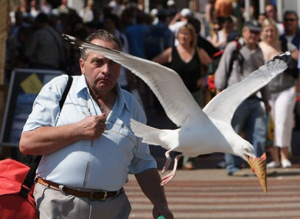 seagull-takes-ice-cream-perfect-timing-630x459