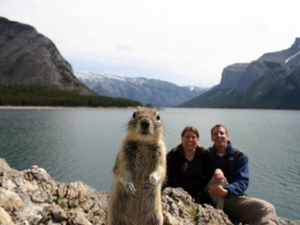 squirrel-photobomb-banff-630x472