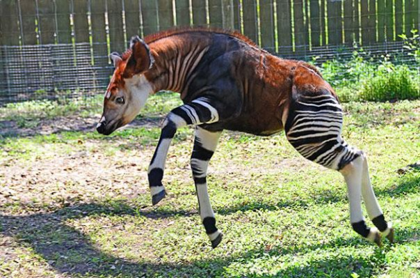 strange-animals-you-didnt-know-2-20-2