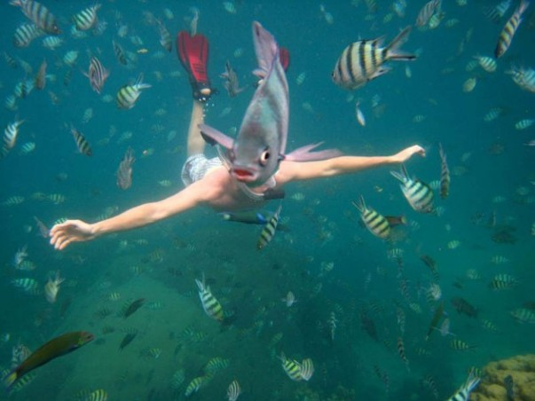 underwater-fish-photobomb-animal-photobombs-630x472