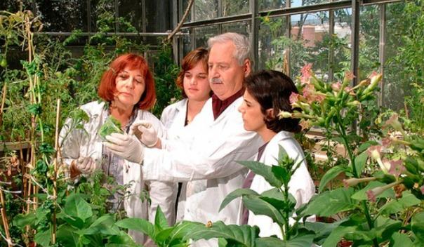 gepstein-superplantas