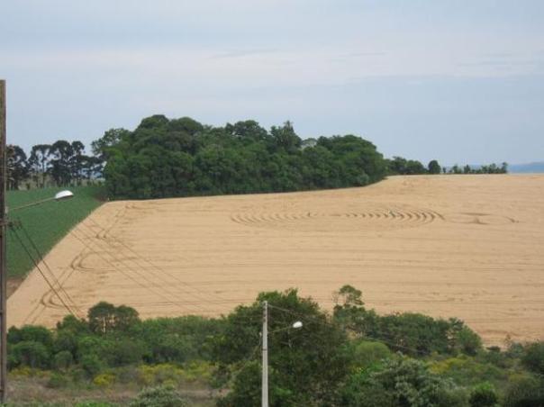 Segundo o ufólogo Ivo Hugo Dohl, um dos agroglifos tem 70 metros, com 13 anéis envolvendo o círculo central Foto: Ivo Hugo Dohl / vc repórter