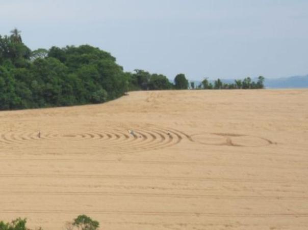 Este é o sexto ano consecutivo em que os sinais aparecem em plantações de trigo na cidade de Ipuaçu, Santa Catarina Foto: Ivo Hugo Dohl / vc repórter