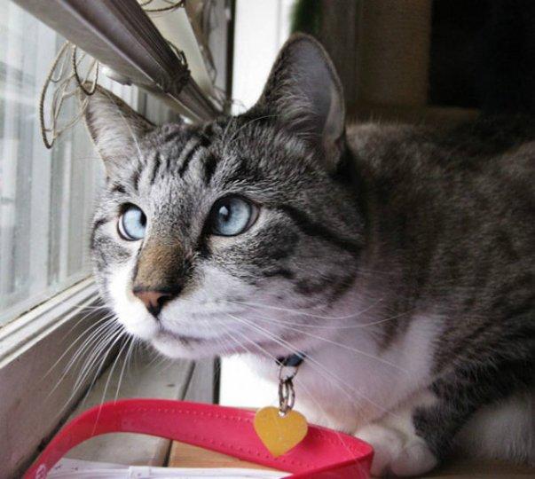 gato-guidu