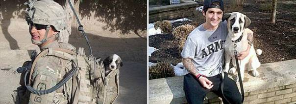 animais-antes-depois-15