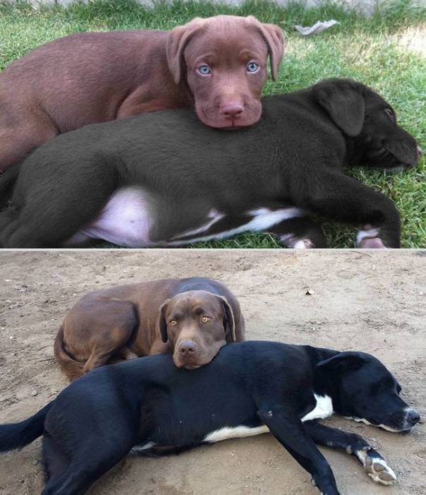 animais-antes-depois-19