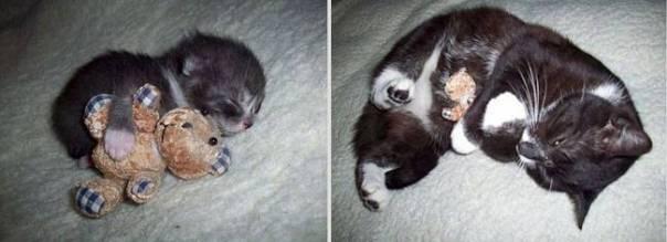 animais-antes-depois-2