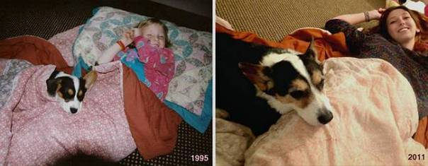 animais-antes-depois-22