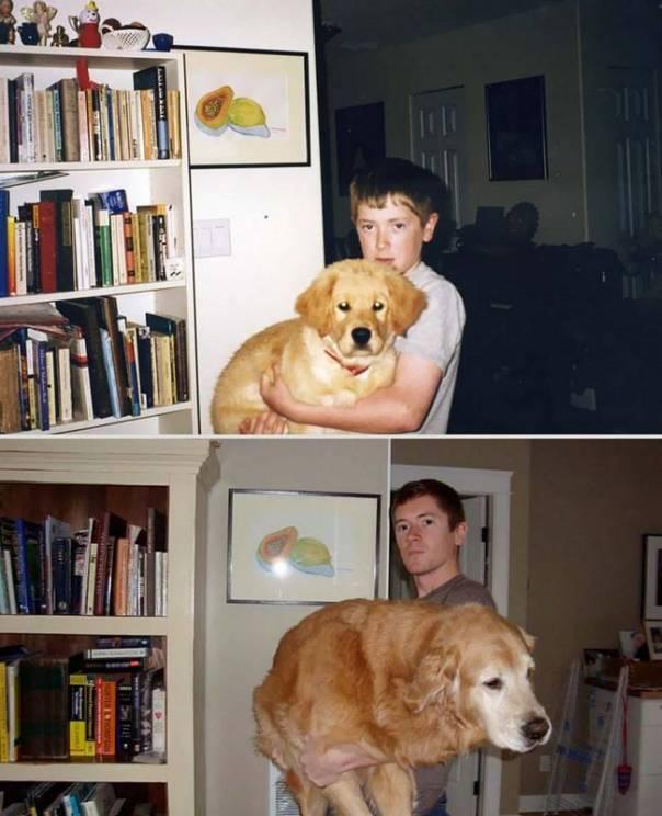 animais-antes-depois-4