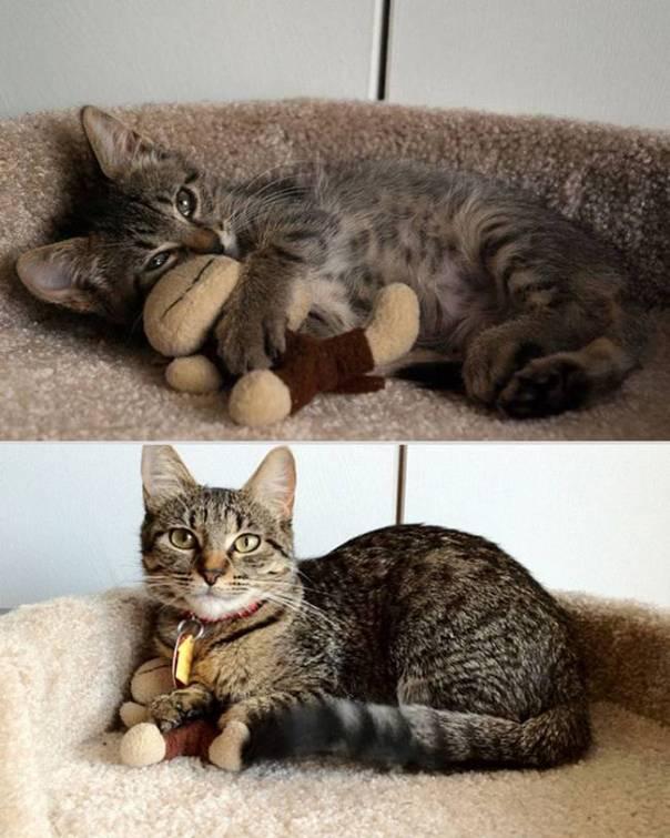 animais-antes-depois-8