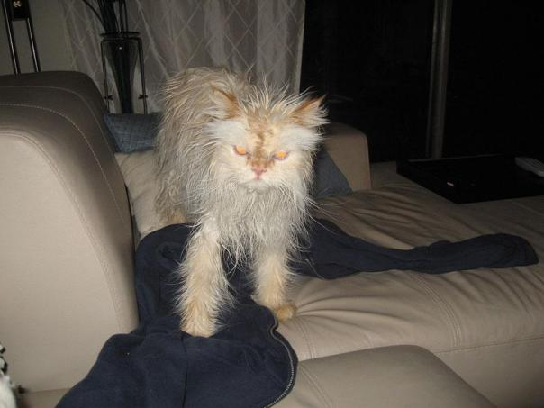funny-wet-cats-10