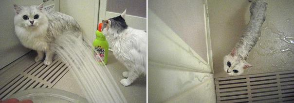 funny-wet-cats-18