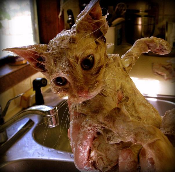 funny-wet-cats-19