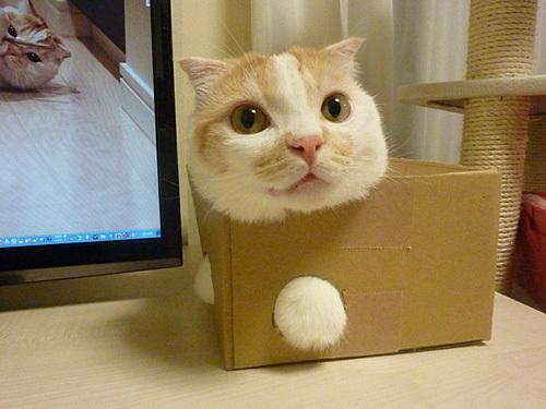 cat-stuck-in-a-box