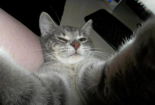 gatos-selfies-10
