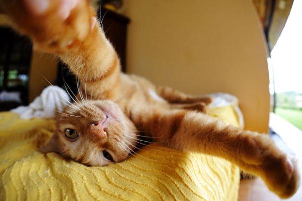 gatos-selfies-13