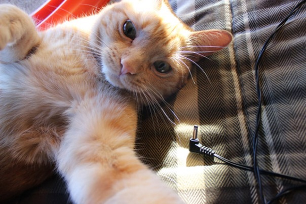 gatos-selfies-15