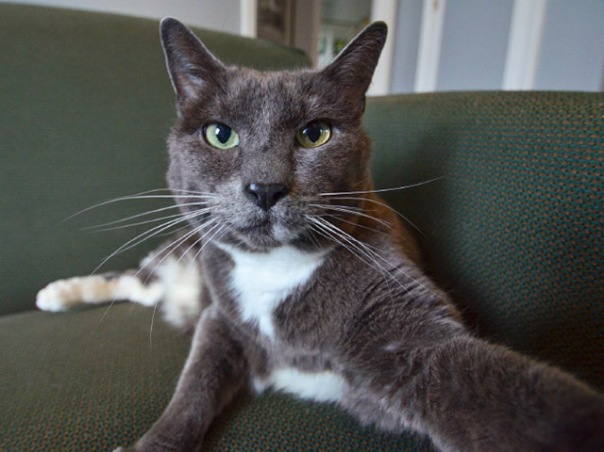 gatos-selfies-16
