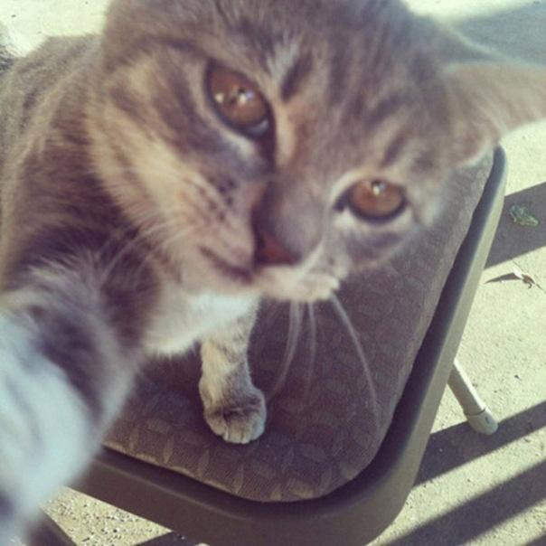 gatos-selfies-3