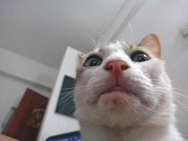 gatos-selfies-5