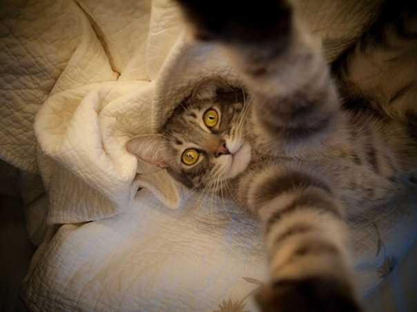 gatos-selfies-7