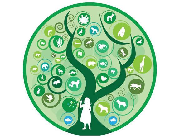 size_590_onu-biodiversidade