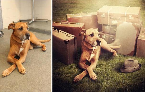 surreal-photography-shelter-dogs-sarolta-ban-3b