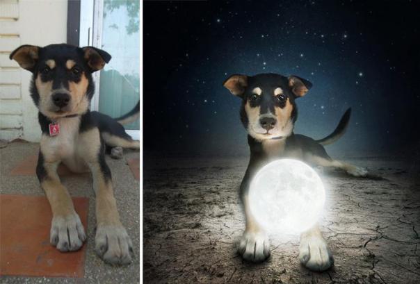 surreal-photography-shelter-dogs-sarolta-ban-4b