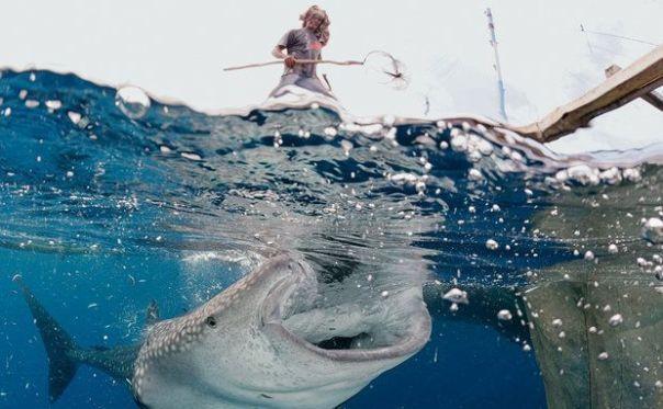 Em cima de plataformas flutuantes, as bagans, pescadores jogam iscas para manter os tubarões longe das redes