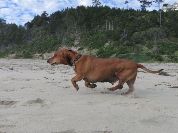 cachorro_obeso2