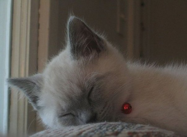 640px-sleeping_cat_2006