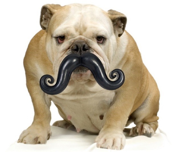 bigode-cachorro-01