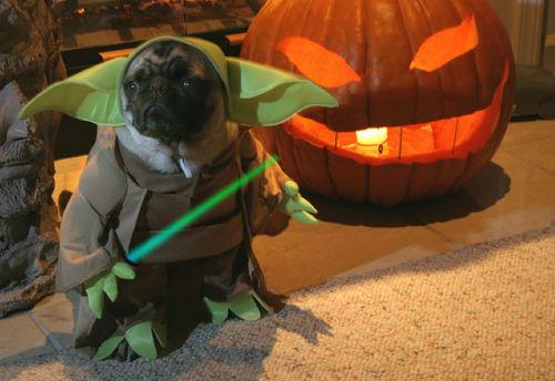 Yoda-Pug1