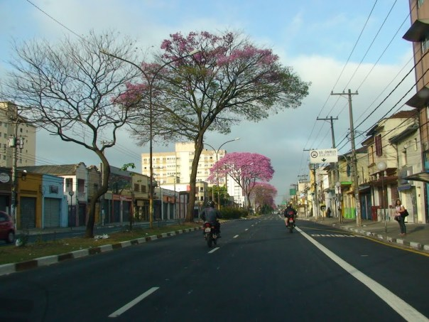 Avenida Guilherme Cotching